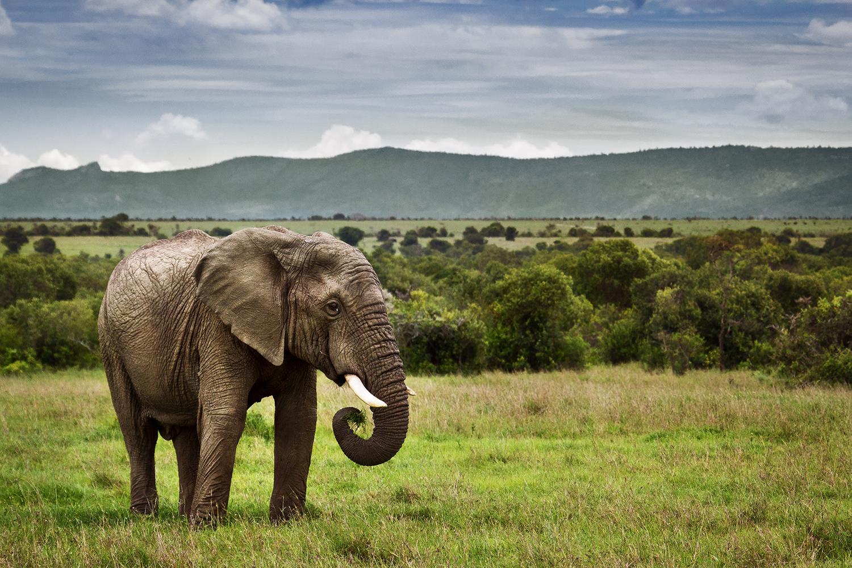 Découvrir le meilleur de l'Afrique avec safarivo.com